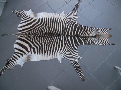 Zebrahuid 01